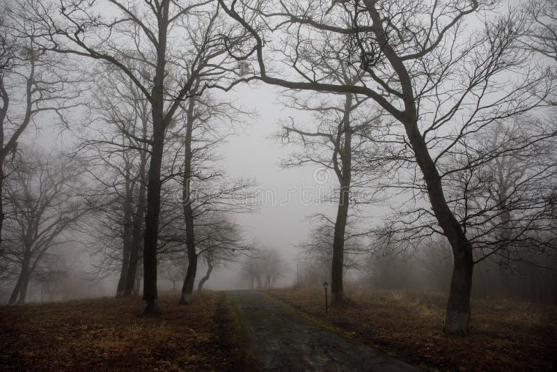 Aménagez avec le beau brouillard dans la forêt sur la colline ou traînez en parc par une forêt mystérieuse d'hiver avec des feuil image libre de droits