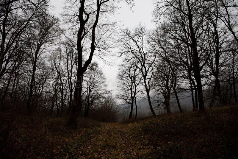 Aménagez avec le beau brouillard dans la forêt sur la colline ou traînez en parc par une forêt mystérieuse d'hiver avec des feuil image stock