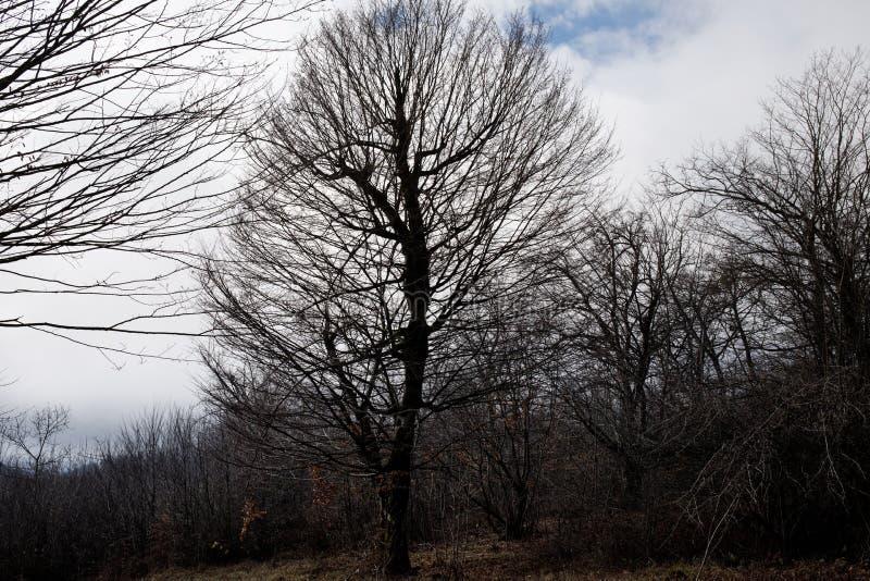 Aménagez avec le beau brouillard dans la forêt sur la colline ou traînez en parc par une forêt mystérieuse d'hiver avec des feuil photos stock