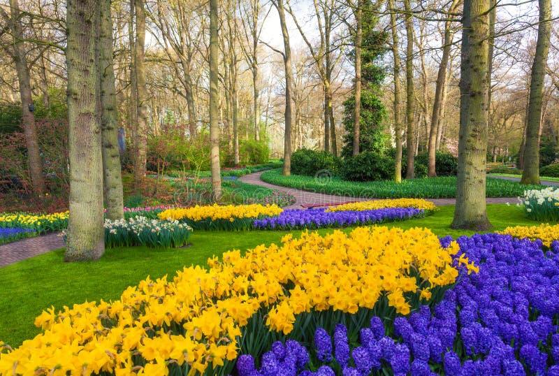 Aménagez en parc avec de belles fleurs de floraison en parc célèbre de Keukenhof image libre de droits