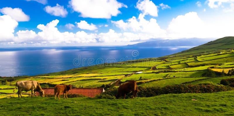 Aménagez en parc avec des champs d'agriculture à l'île de Corvo, Açores, Portugal photographie stock libre de droits