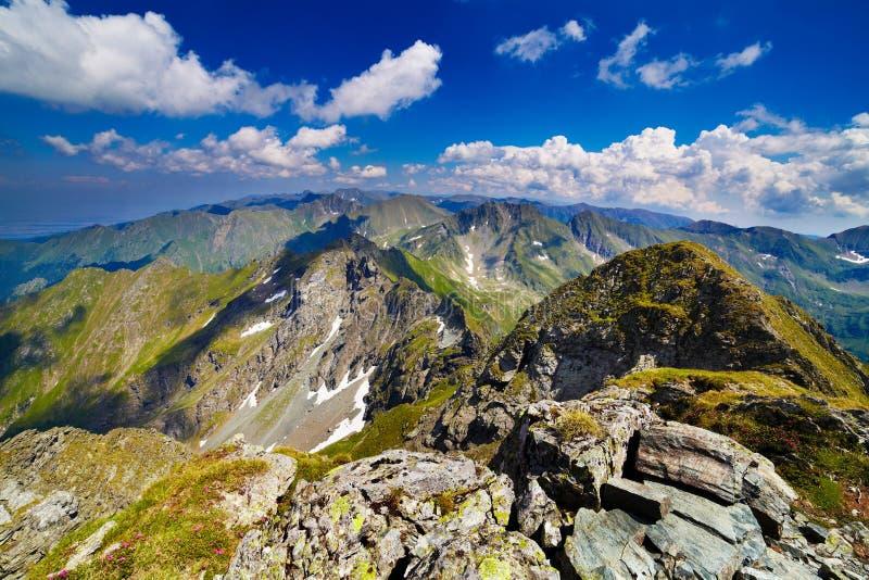 Aménagez en parc avec des montagnes de Fagaras en Roumanie image libre de droits