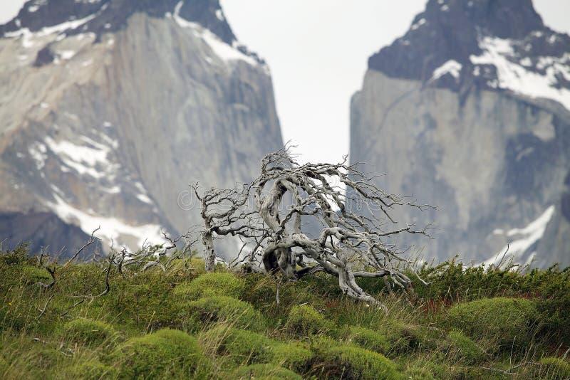 Aménagez en parc avec l'arbre étonnant en parc national de Torres del Paine, région de Magallanes, Chili du sud photo libre de droits