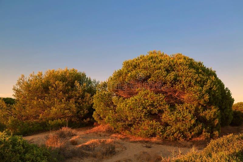 Aménagez en parc avec l'arbre sur la dune de sable dans le temps de coucher du soleil photos libres de droits