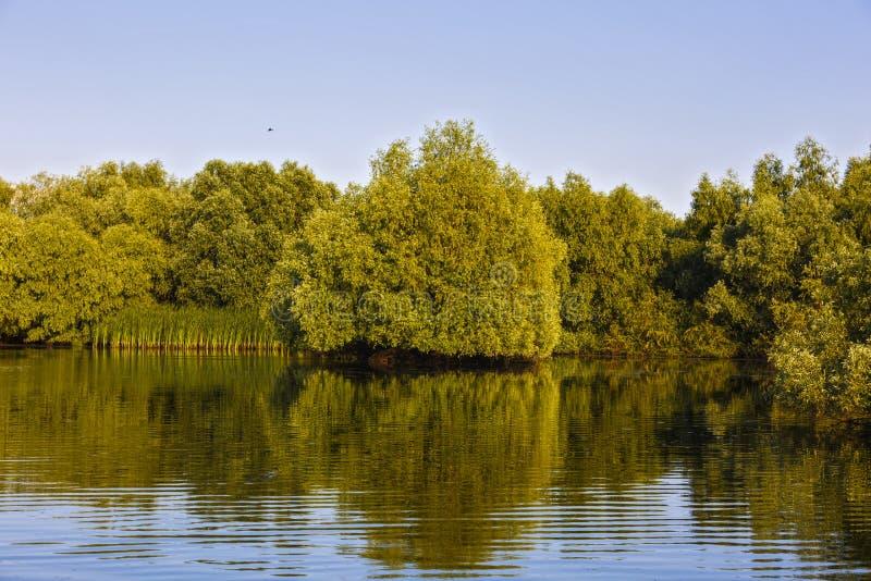 Aménagez en parc avec l'eau et la végétation dans le delta de Danube images libres de droits