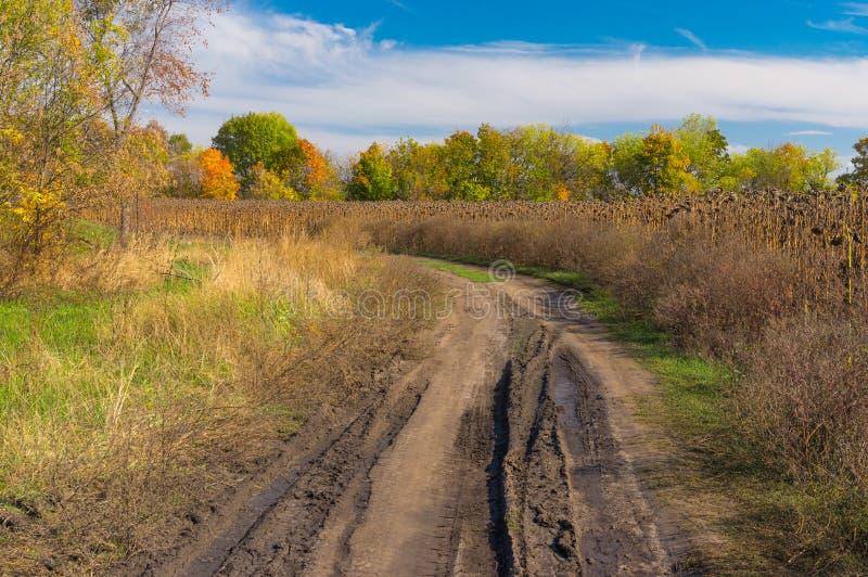 Aménagez en parc avec la route de terre sale au bord du gisement de tournesol photos stock