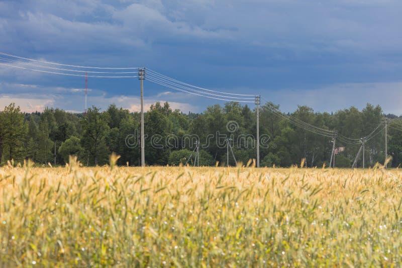 Aménagez en parc avec le champ de seigle et la ligne de transmission mûrs de l'électricité photos libres de droits