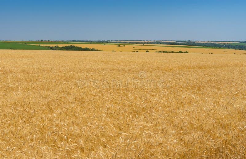 Aménagez en parc avec le ciel sans nuages bleu et les champs de blé mûrs près de la ville de Dnipro, Ukraine centrale image libre de droits