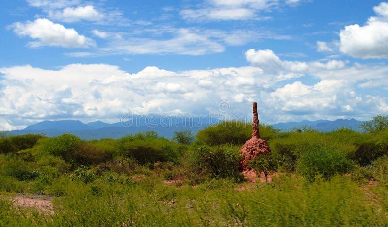 Aménagez en parc avec le monticule de termite dans la savane à la vallée de Weito, Ethiopie photo libre de droits