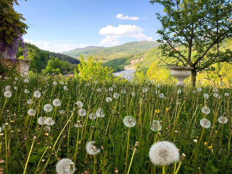 Aménagez en parc avec les collines et la rivière et le champ des pissenlits au printemps photographie stock