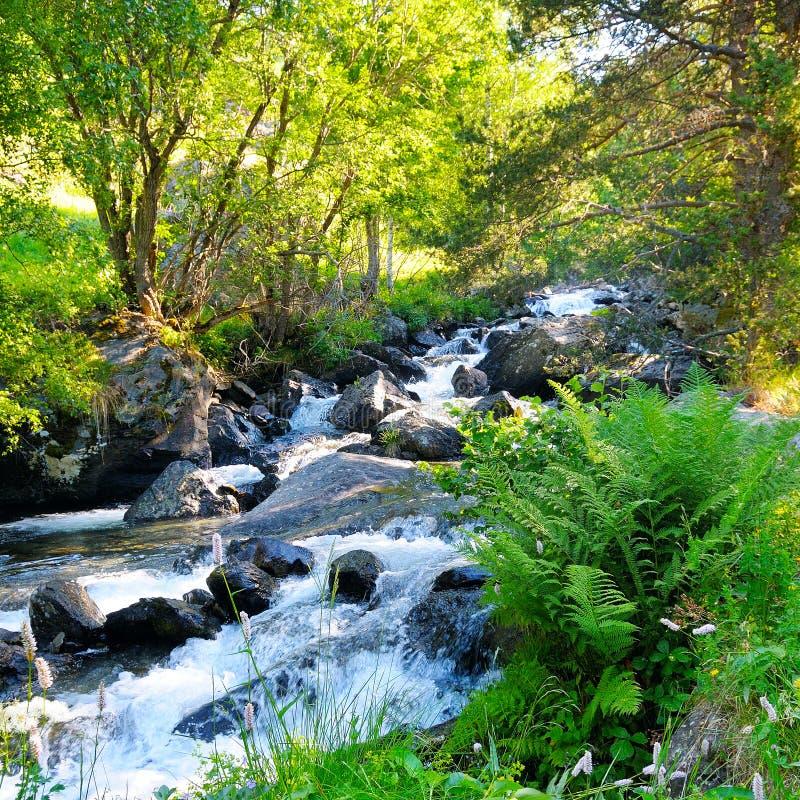 Aménagez en parc avec les montagnes, la forêt et une rivière dans l'avant photos stock
