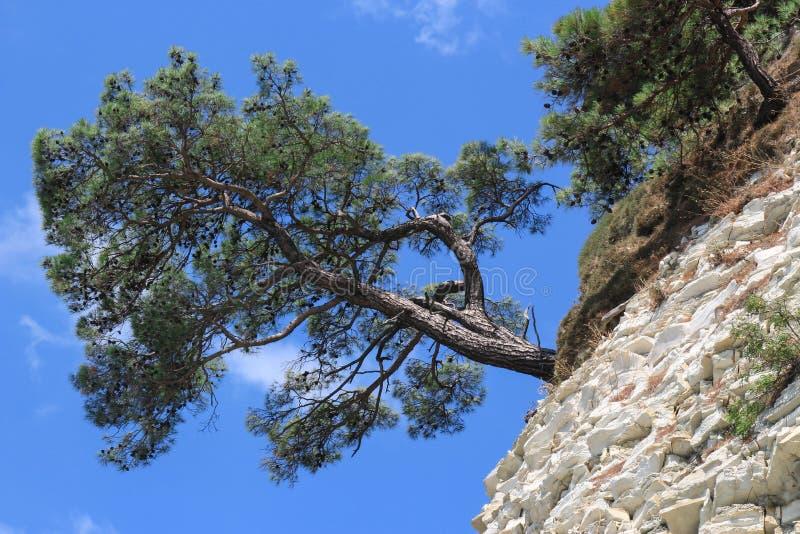 Aménagez en parc avec un pin isolé sur la roche photo stock