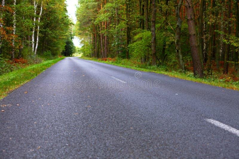 Aménagez en parc dans la route goudronnée de la Pologne en automne tôt de forêt images libres de droits