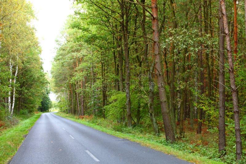 Aménagez en parc dans la route goudronnée de la Pologne en automne tôt de forêt photographie stock libre de droits