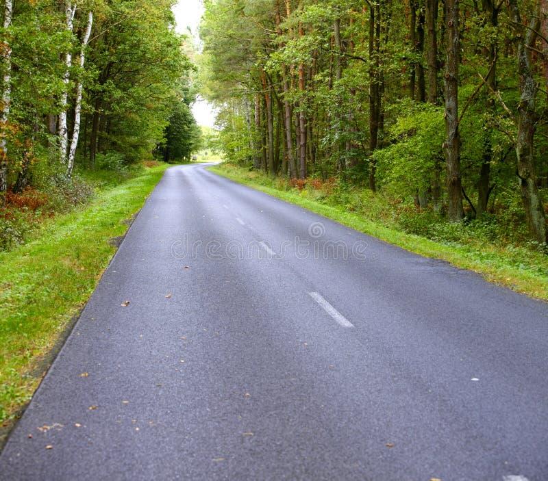 Aménagez en parc dans la route goudronnée de la Pologne en automne tôt de forêt photo libre de droits