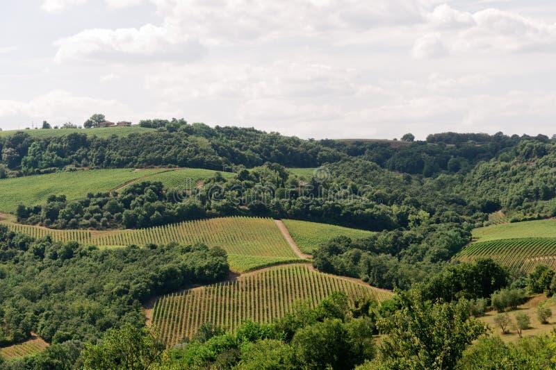 Aménagez en parc en Ombrie (Italie) avec des vignes image libre de droits