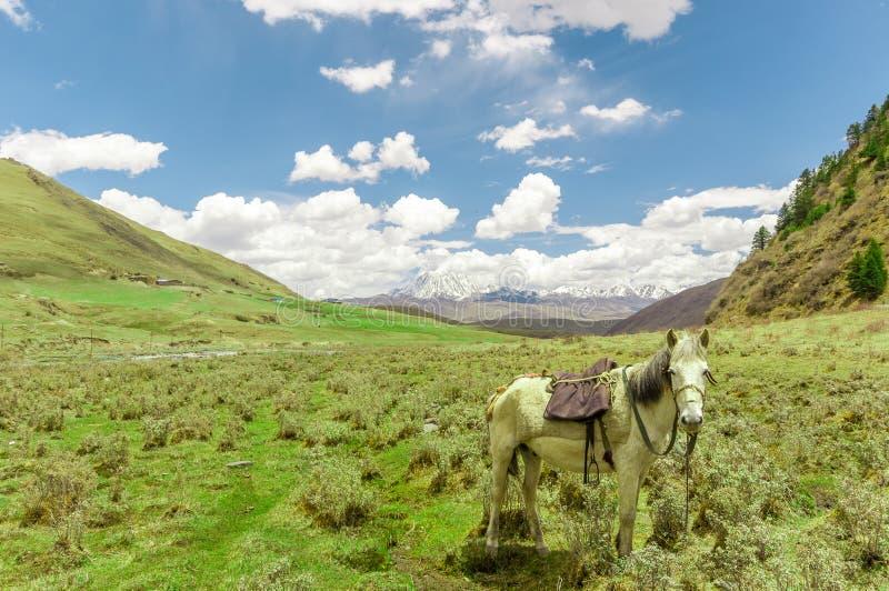 Aménagez en parc par la prairie de tagong avec le cheval dans Sichuan image libre de droits