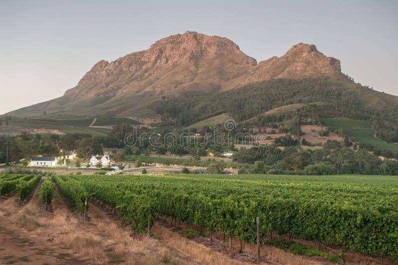 Aménagez l'image en parc d'un vignoble, Stellenbosch, Afrique du Sud. images libres de droits
