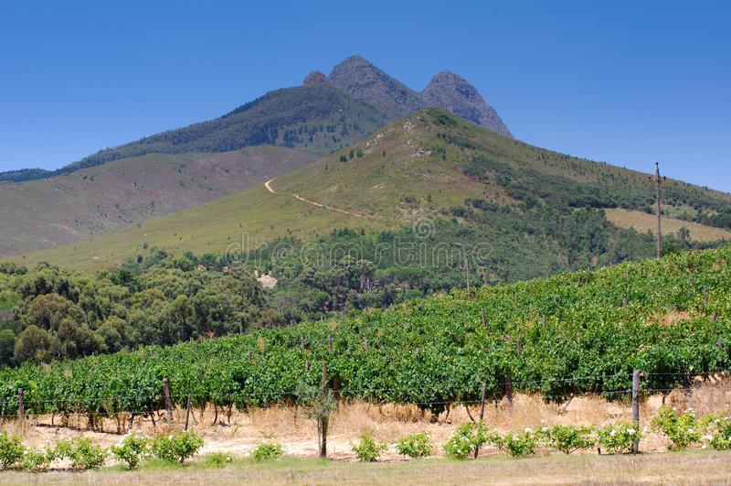 Aménagez l'image en parc d'un vignoble, Stellenbosch, Afrique du Sud. photos libres de droits