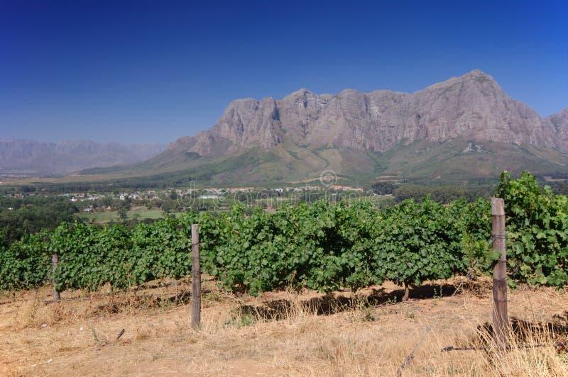 Aménagez l'image en parc d'un vignoble, Stellenbosch, Afrique du Sud. images stock