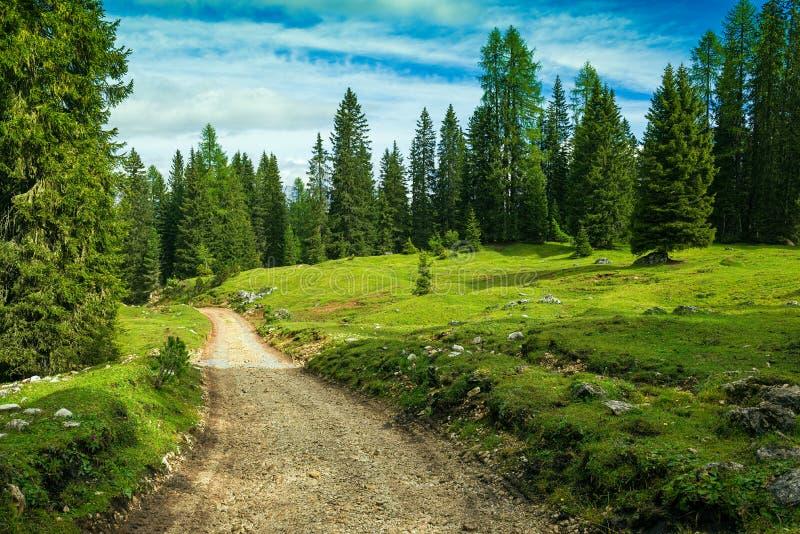 Aménagez l'Italie en parc, dolomites - la visite de forêt de pin photos stock