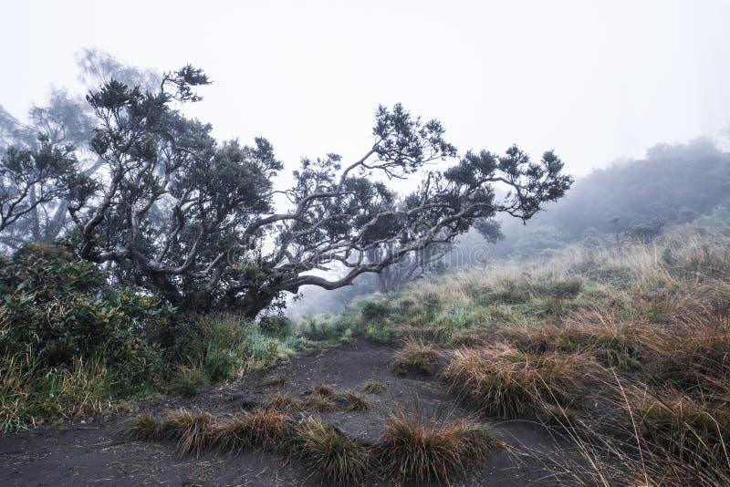 Aménagez la forêt en parc foncée mystérieuse avec l'environnement flou de brouillard dans le matin en hiver image stock