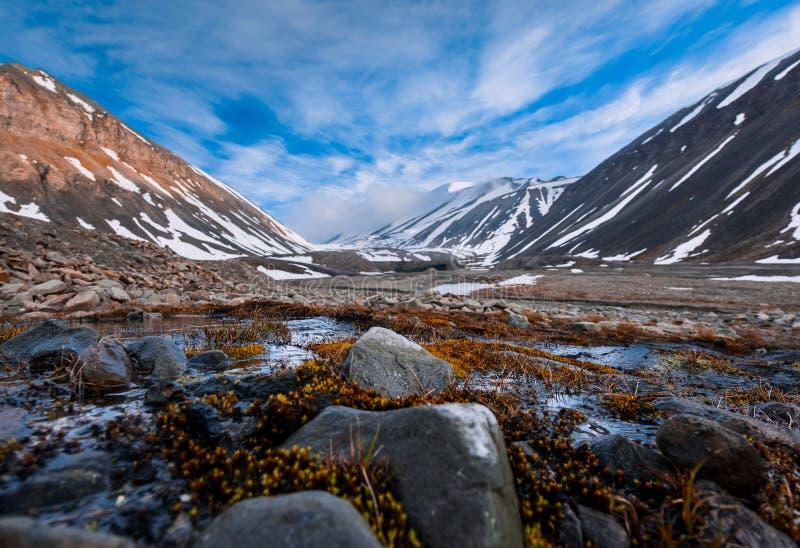 Aménagez la nature en parc des montagnes de Spitzbergen Longyearbyen le Svalbard un jour polaire avec les fleurs arctiques pendan image libre de droits