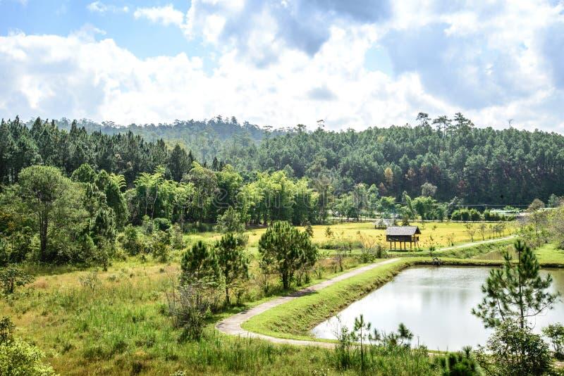 Aménagez la vue en parc du chiangmai Thaïlande de forêt de pin photo stock