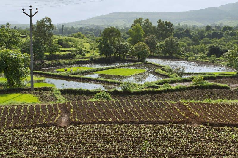 Aménagez la vue en parc du riz cultivant près de Bhor, Pune images stock