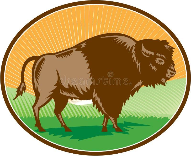 Américain Bison Oval Woodcut illustration stock