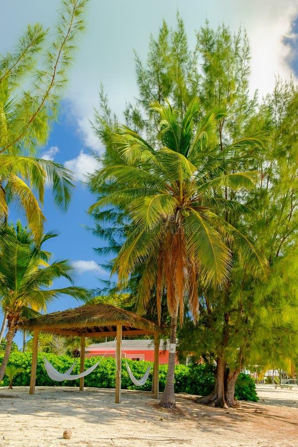 Amache di Piccola Cayman fotografia stock