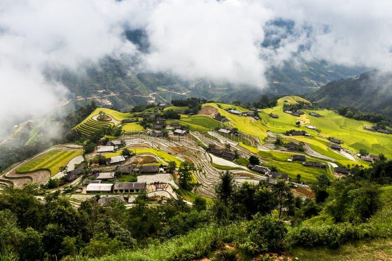 Amadure?a terra?os do arroz em Ha Giang, Vietname imagens de stock royalty free