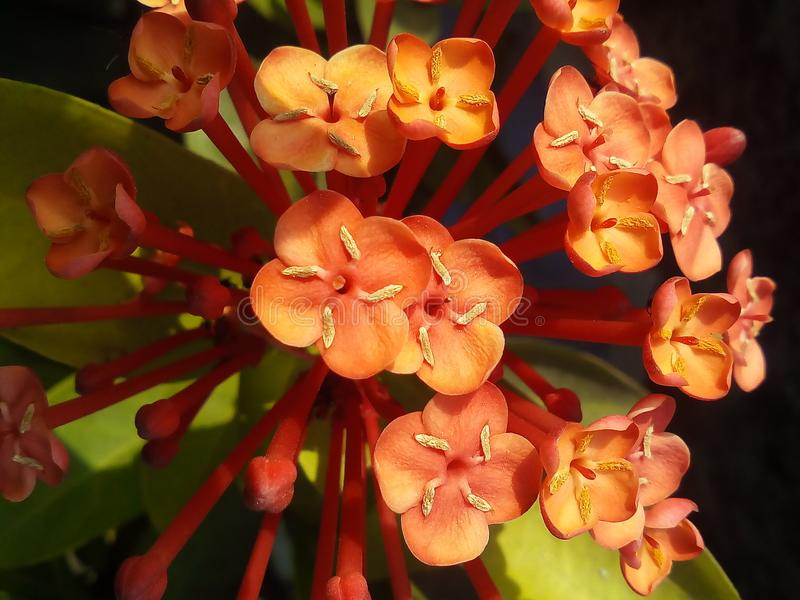 Amaging kwiat fotografia stock