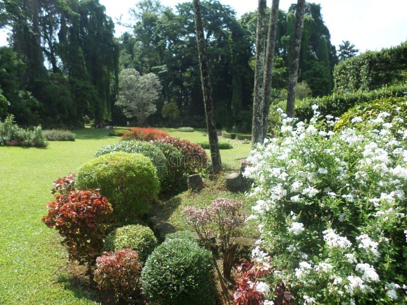 Amaizing flower garden of Sri Lanka stock photo