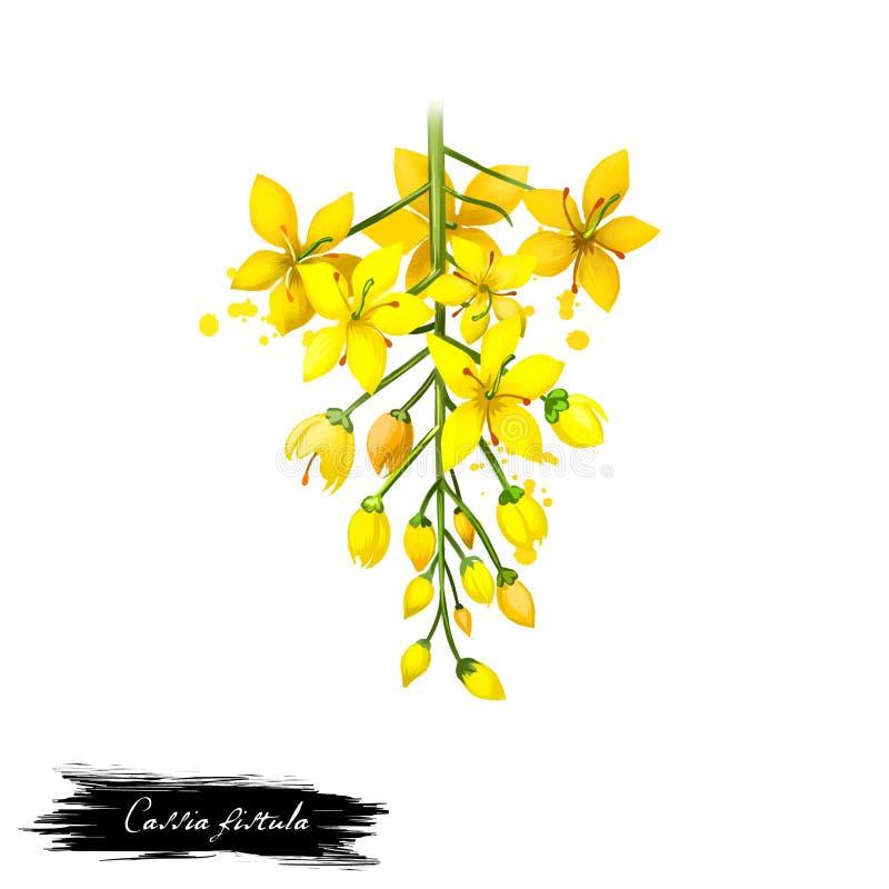 Amaltas - ayurvedic Kraut der Kassiefistel, Blume digitale Kunstillustration mit dem Text lokalisiert auf Weiß Gesunde organische stock abbildung