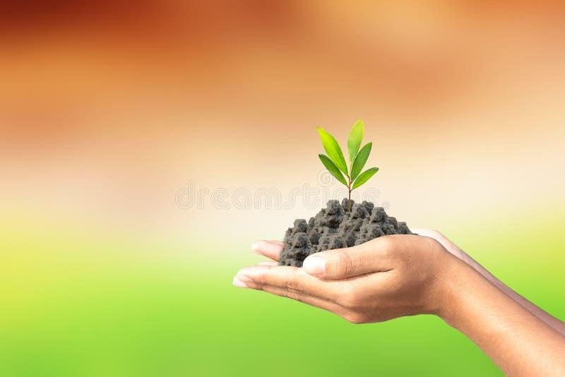 Amamos el mundo de ideas, hombre plantamos un árbol en las manos fotografía de archivo libre de regalías
