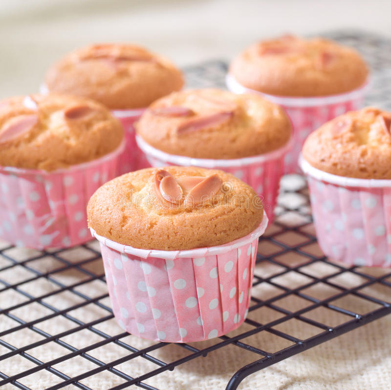 Amandel cupcakes royalty-vrije stock afbeeldingen