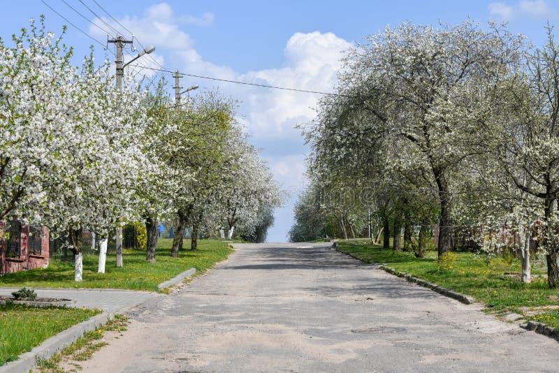 Amandelbomen die in boomgaard tegen blauw bloeien, de Lentehemel De bomen zijn bloeiend stock fotografie