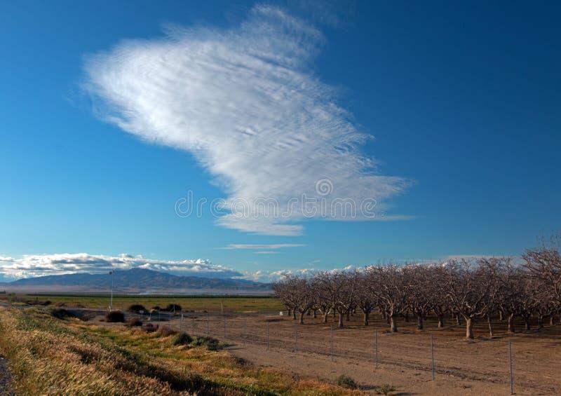 Amandelboomgaard onder lenticular wolken in Centraal Californië dichtbij Bakersfield Californië royalty-vrije stock afbeelding