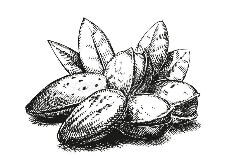 Amandelen en pistaches vector illustratie