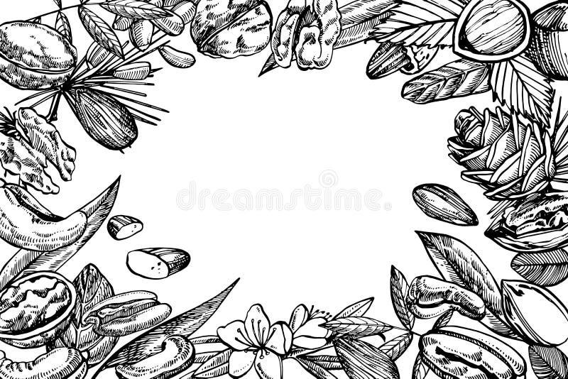 Amandelen, Pecannoot, Cashewnoten, Hazelnoot, Pijnboomnoten, Okkernoten en de illustraties van de Notemuskaatschets Vector getrok stock illustratie
