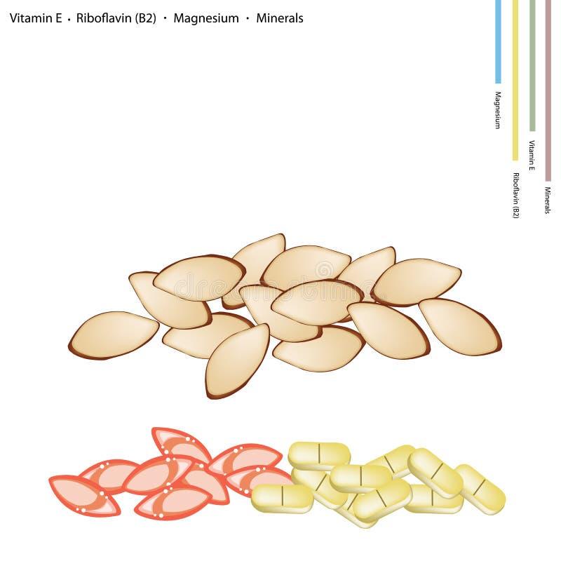 Amandes avec la vitamine E, la riboflavine et les minerais illustration de vecteur
