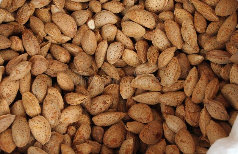Amandes Amandes crues avec des coquilles Écrous organiques frais crus d'amande Fond d'amande fond nuts Texture et fond d'amande photo stock
