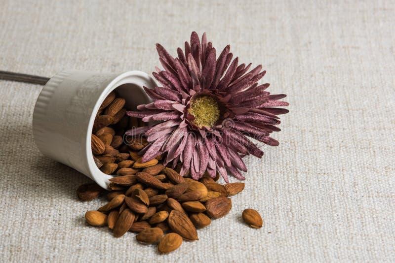 Amandes ?pluch?es dans une cuvette et des fruits secs blancs d'amandes sur la texture beige de tissu, d?coration de fleur, l'espa photographie stock libre de droits