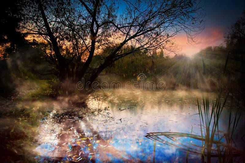 Amanecer brumoso sobre bosque del lago imagenes de archivo