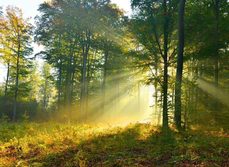 Amanecer del bosque fotos de archivo libres de regalías