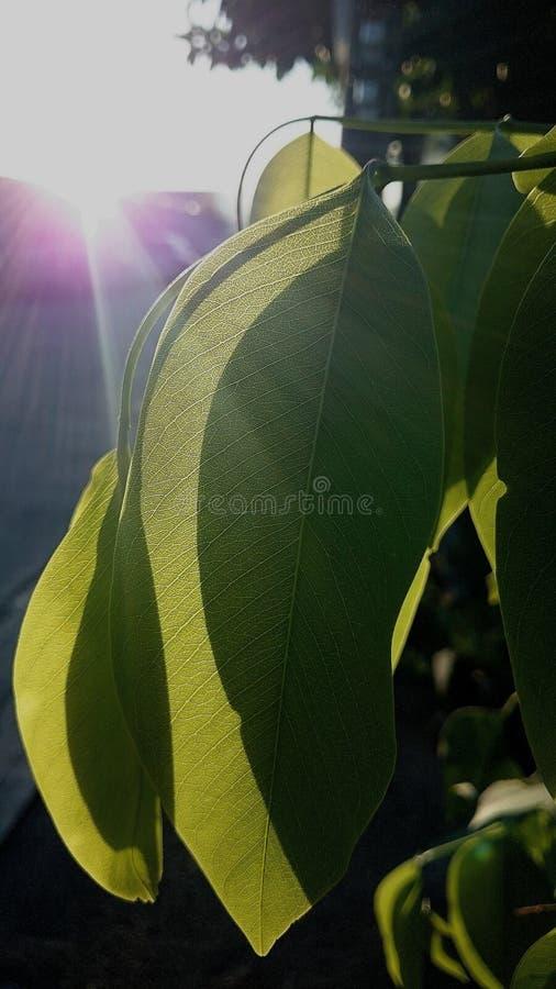 Amanecer del sol imagen de archivo libre de regalías