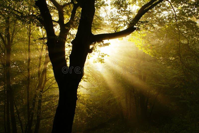 Amanecer en bosque foto de archivo libre de regalías