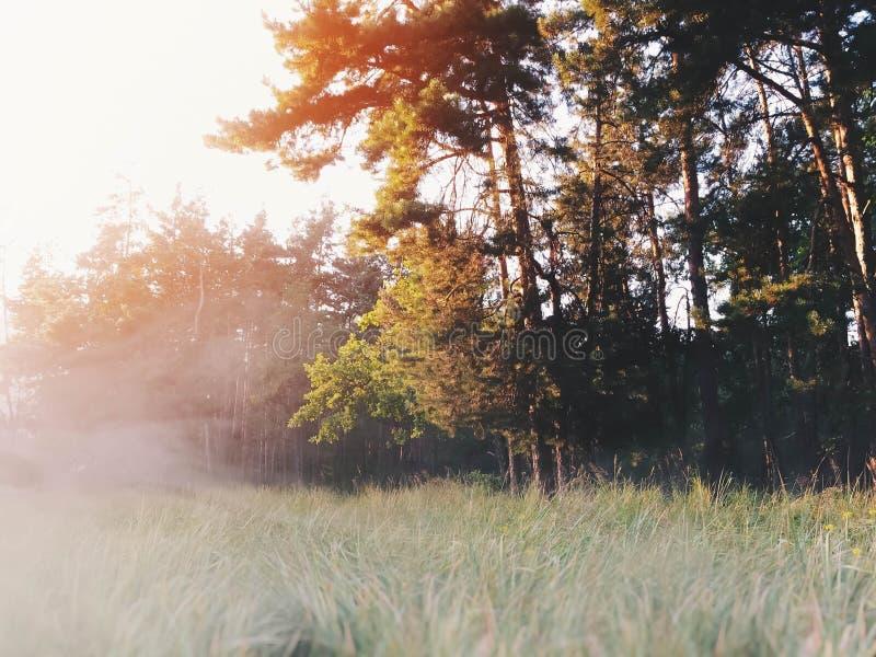 Amanecer en el bosque imagen de archivo libre de regalías