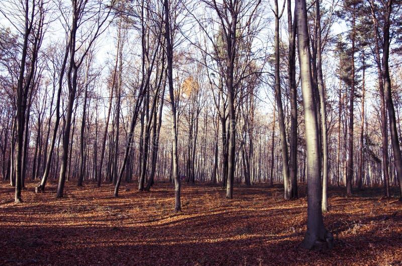 Amanecer en el bosque de otoño fotografía de archivo